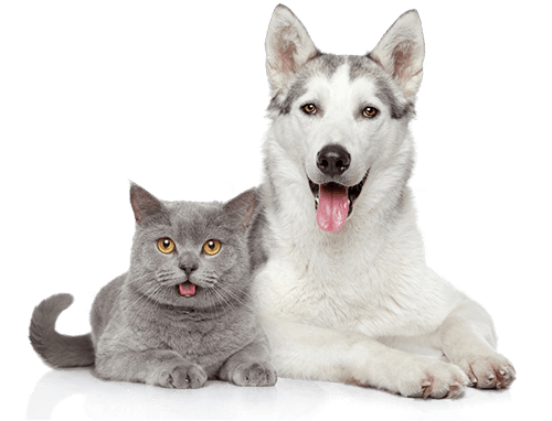 Cheap Pet insurance Uk